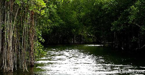 Black River - Jamaica