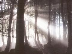 Sombra en el Bosque